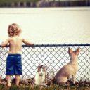 犬猫と少年
